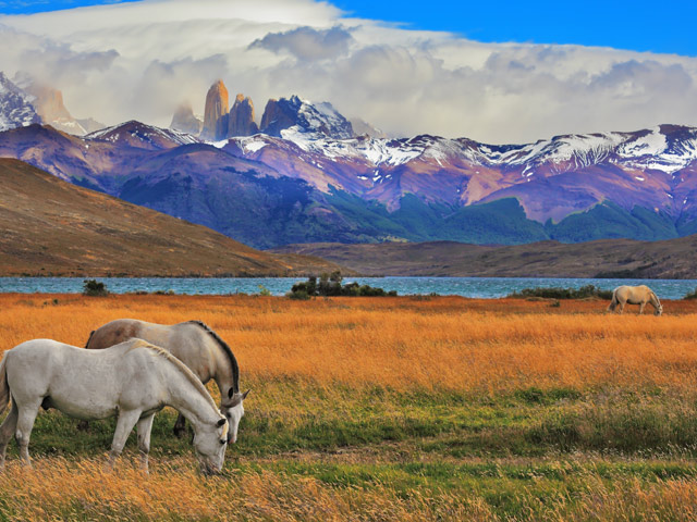 Horses in Chile